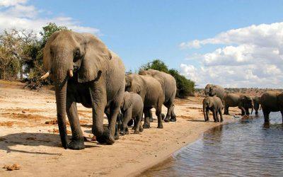 Zambie / Botswana