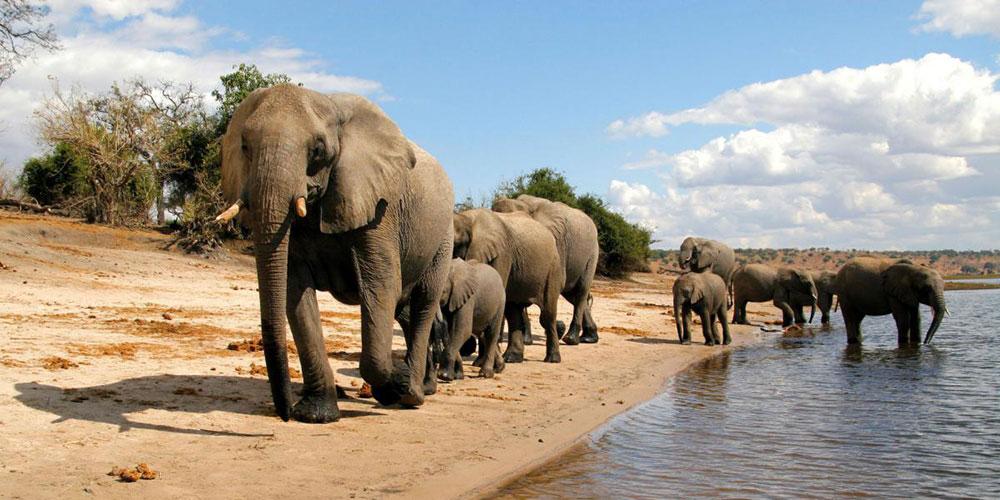 Voyage professionnel en Afrique